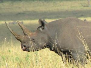Amboseli y lo mejor de Tanzania