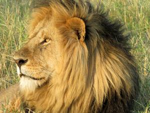 Safari Big Five