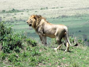 Kenia en esencia