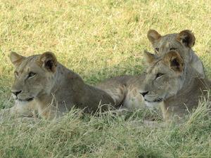 Maravillas de Kenia