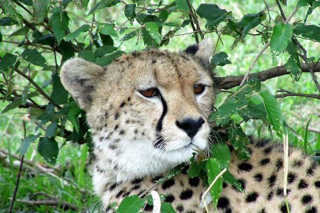 Parques de Kenya