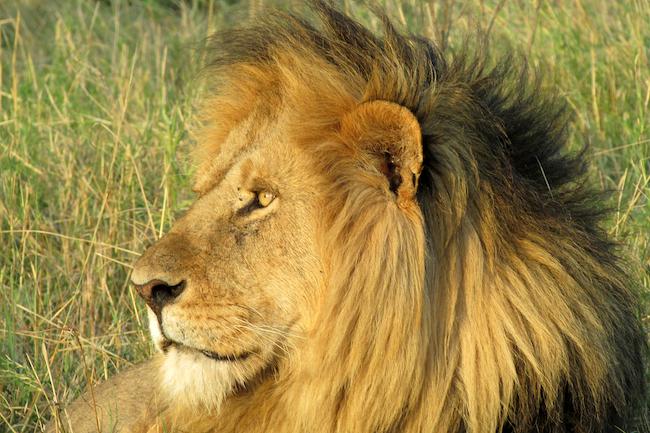 Safaris a medida