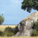 Los famosos kopjes, formaciones rocosas de granito en las que los felinos descansan gran parte del día