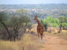 9 consejos para ir de safari