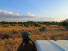 Un día de safari