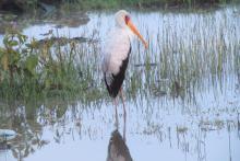 Safaris ornitológicos